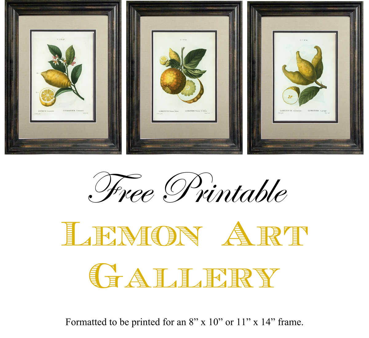 Free Printable Lemon Art Gallery