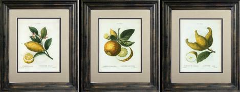 Lemon Art Gallery_1