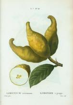 Lemon Art Piece_3