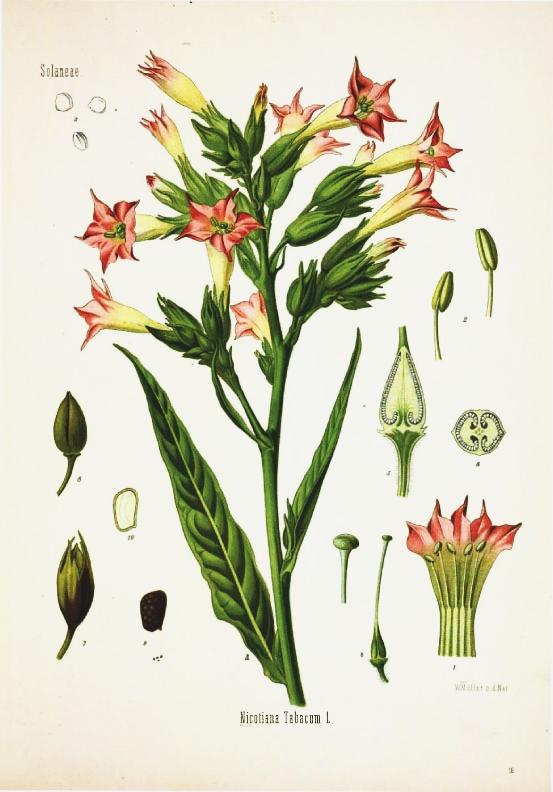 21 free botanical prints