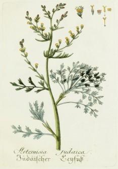 Blue Botanical Image_1