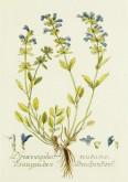 Blue Botanical Image_5