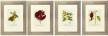 Burgundy Botanical Print Pinterest Image