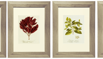 16 free printable burgundy botanical prints - Print Pictures Free
