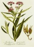 Lavender Botanical_18
