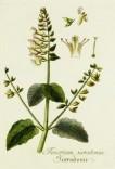 Lavender Botanical_20