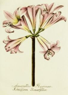 Lavender Botanical_9