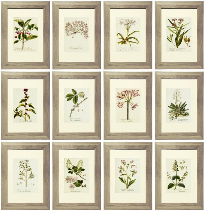 Free Printable Worksheets Art : Free lavender botanical printables simply made by rebecca