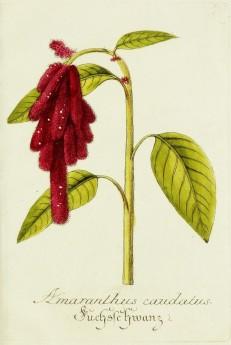 Magental Botanical_12