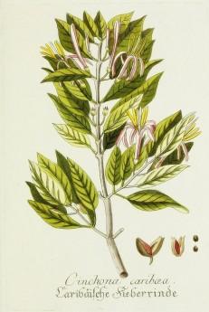 Magental Botanical_13