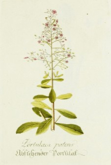 Magental Botanical_15