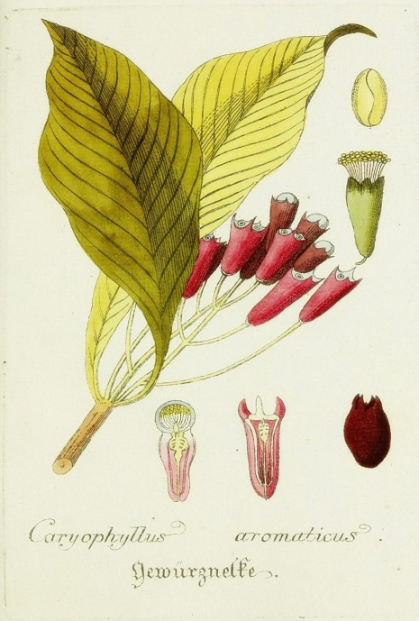 Magental Botanical_16