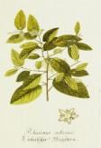 Magental Botanical_2