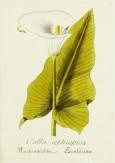 Magental Botanical_3