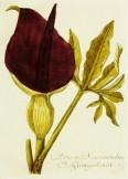 Magental Botanical_4