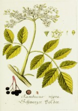 Magental Botanical_5