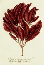 Magental Botanical_6