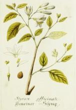 Magental Botanical_7