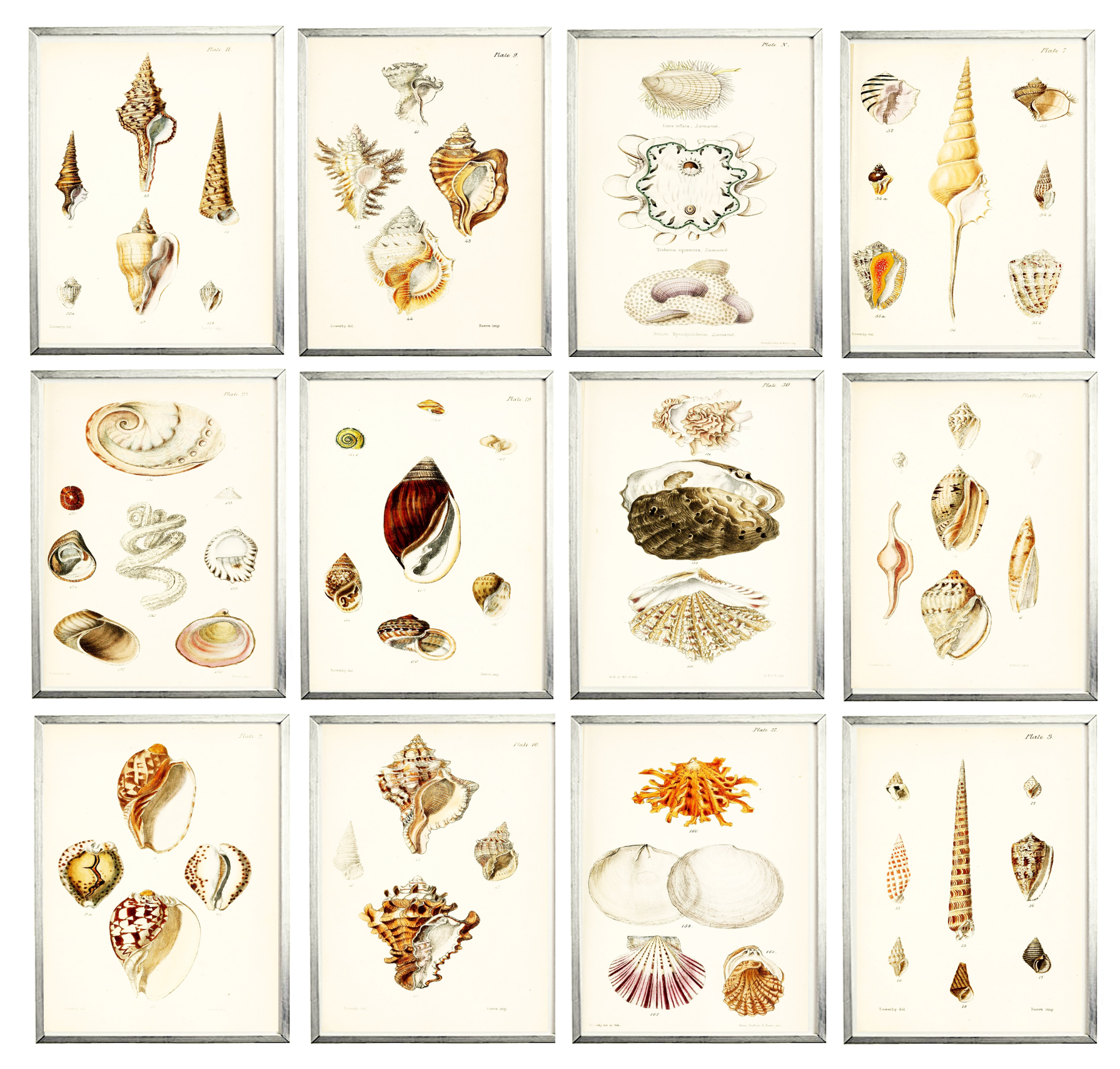 Seashell Gallery Wall_2