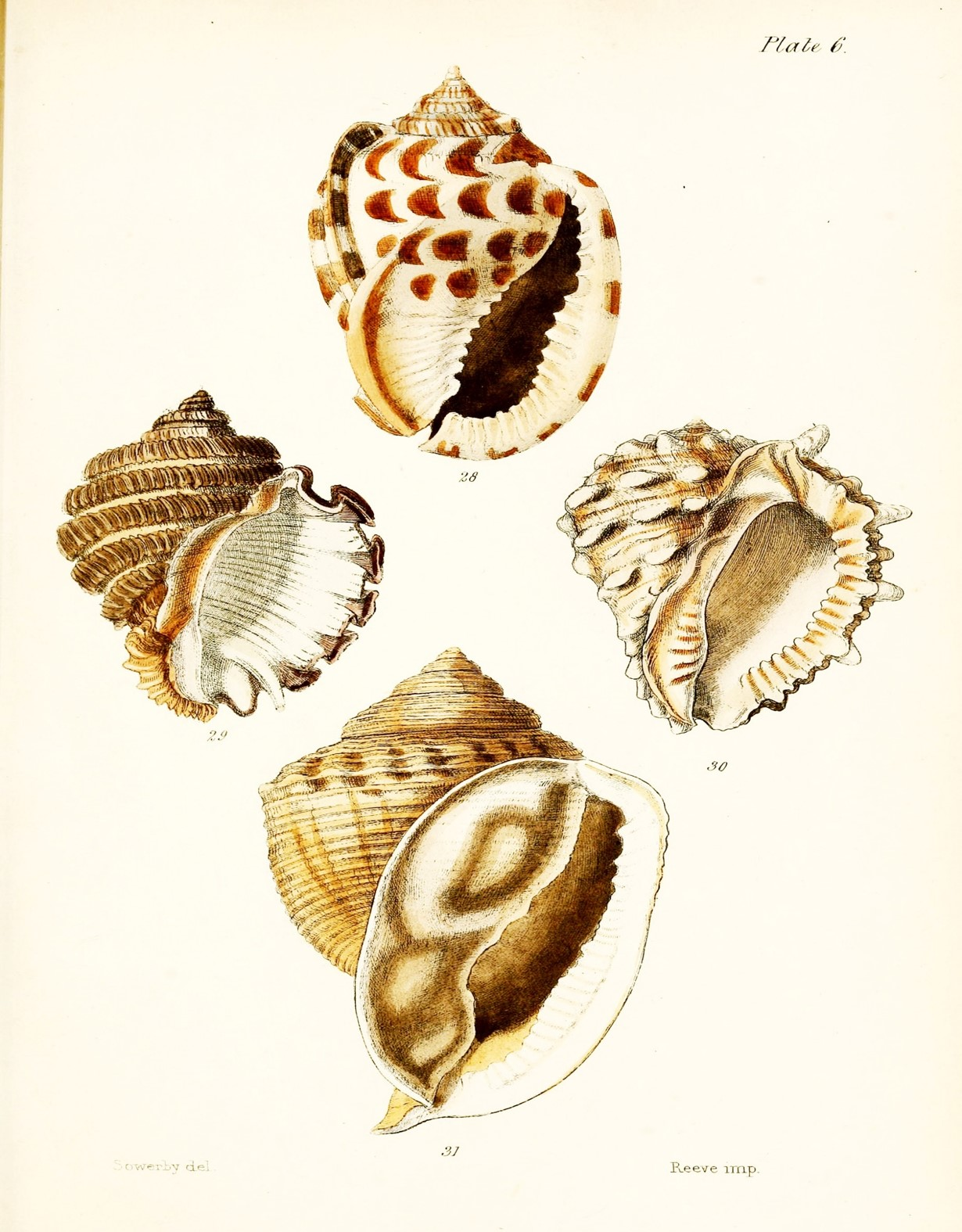 Free Printable Seashell Art Simply Made By Rebecca