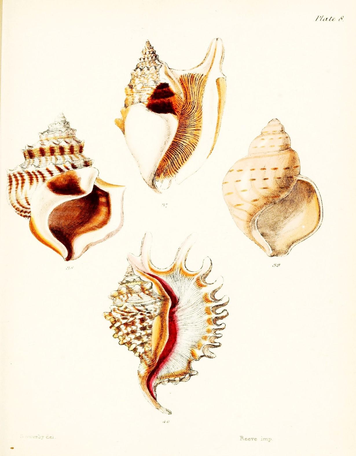 Free Printable Seashell Art Simply Made By Rebecca