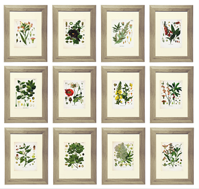 21 Free Botanical Printables