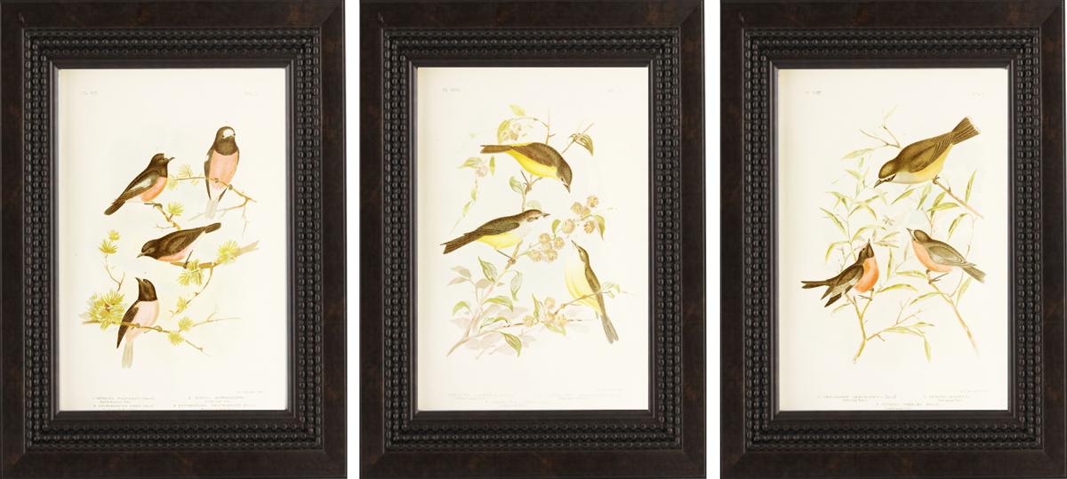 Bird Art Gallery_1