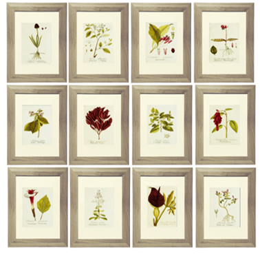Burgundy Botanical Printables
