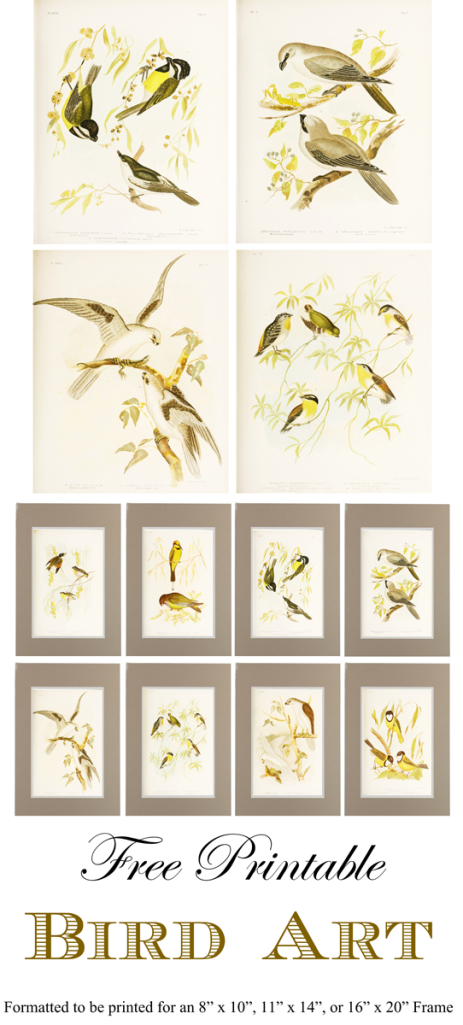 Free Printable Bird Art Gallery Wall_1