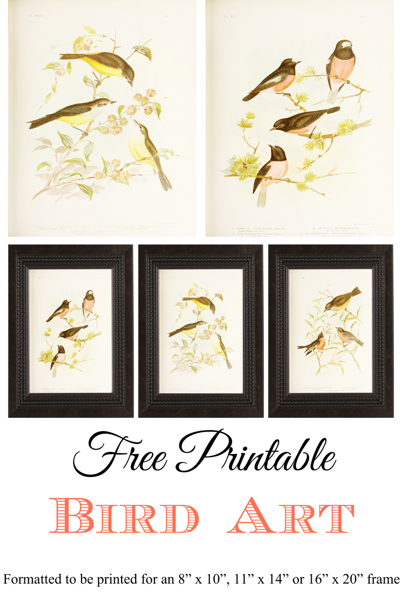Free Printable Bird Art_1