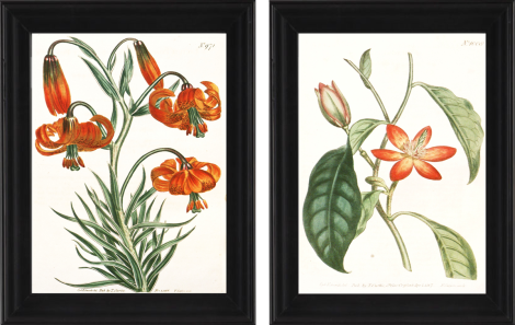 Free Printable Orange Botanical Art_Prints