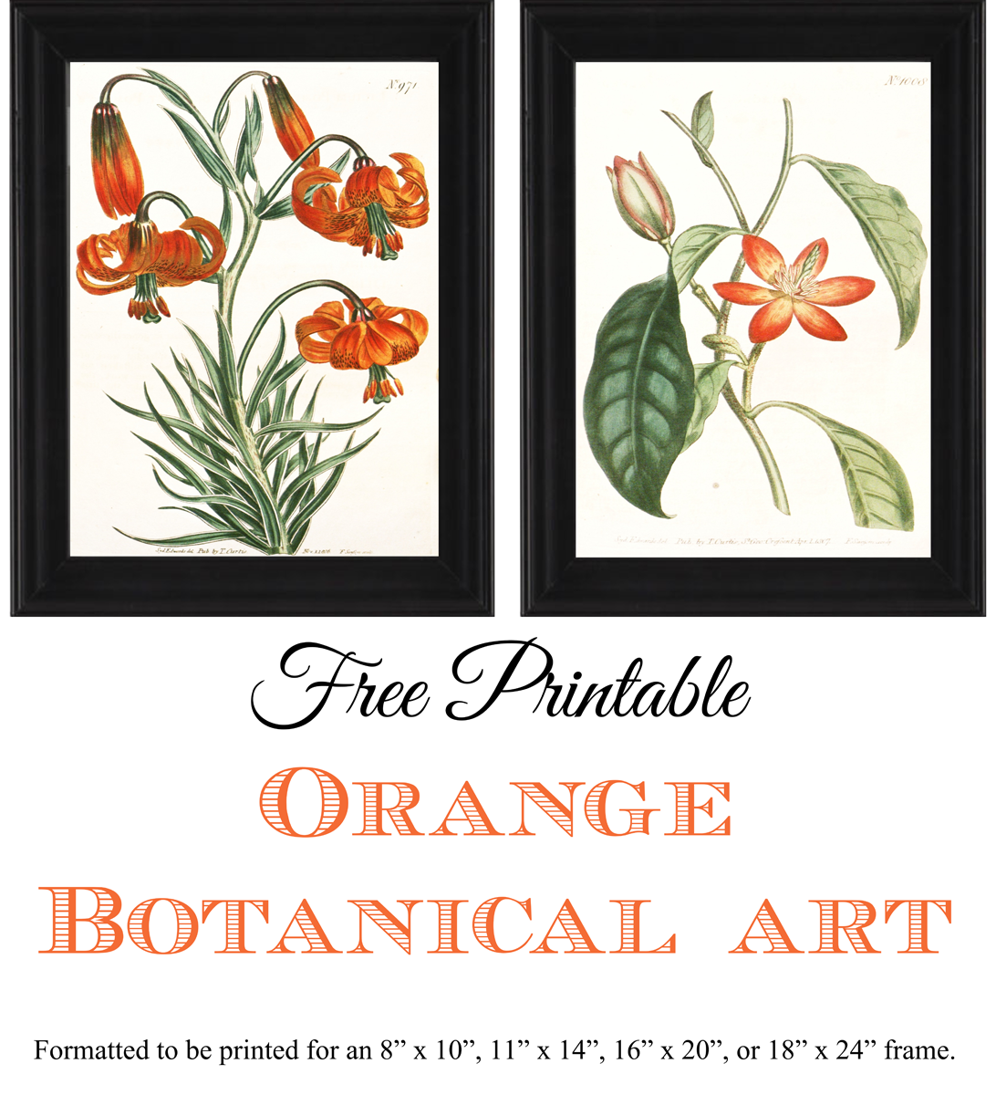 photo about Free Printable Artwork to Frame titled Cost-free Printable Orange Botanical Artwork