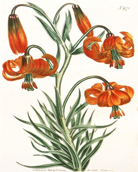Orange Botanical 1