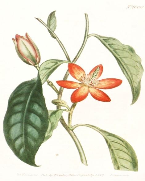 Orange Botanical 2