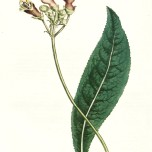 Purple Botanical_3